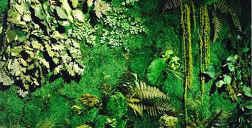 tropical feuillu