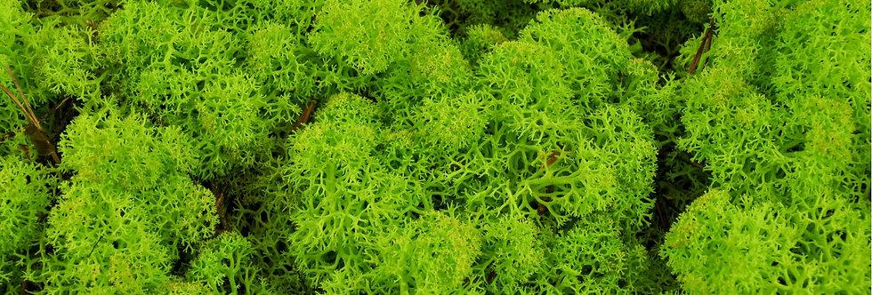 Lichen vert citon