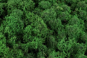 lichen vert foncé