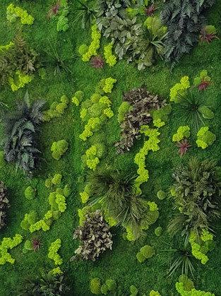 Kit mur végétal coloré