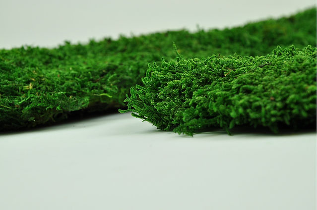 mousse-plate-stabilisee-verte (1).jpg