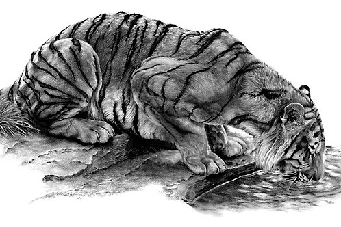 Thirsty Tiger