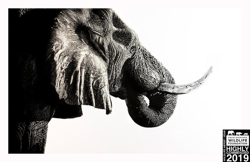 King Elephant HC Stamp.jpg