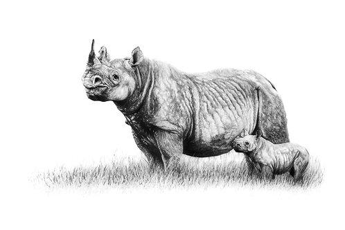 Black Rhino - Mother & Calf