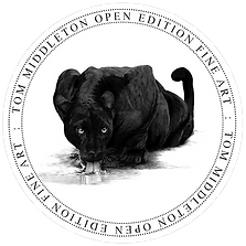 Open Edition Stamp