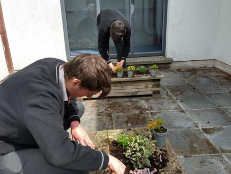 School launches biodiversity drive!