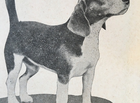 Great Hounds:  CH. Croy's Superfine Toney