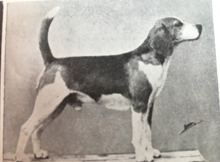 Lew Madden on the Dual Purpose Hound