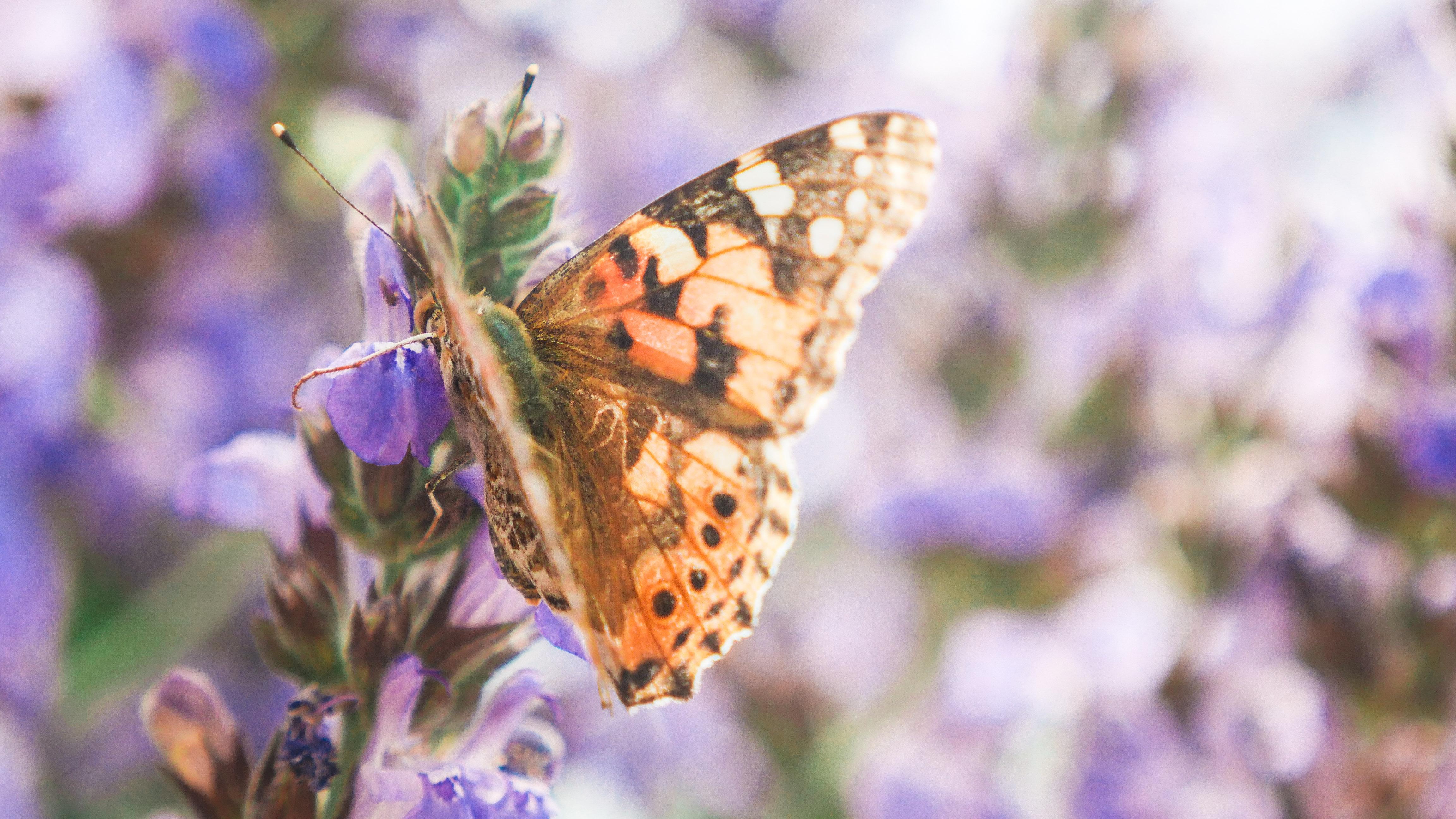 butterflies edited (4 of 24)