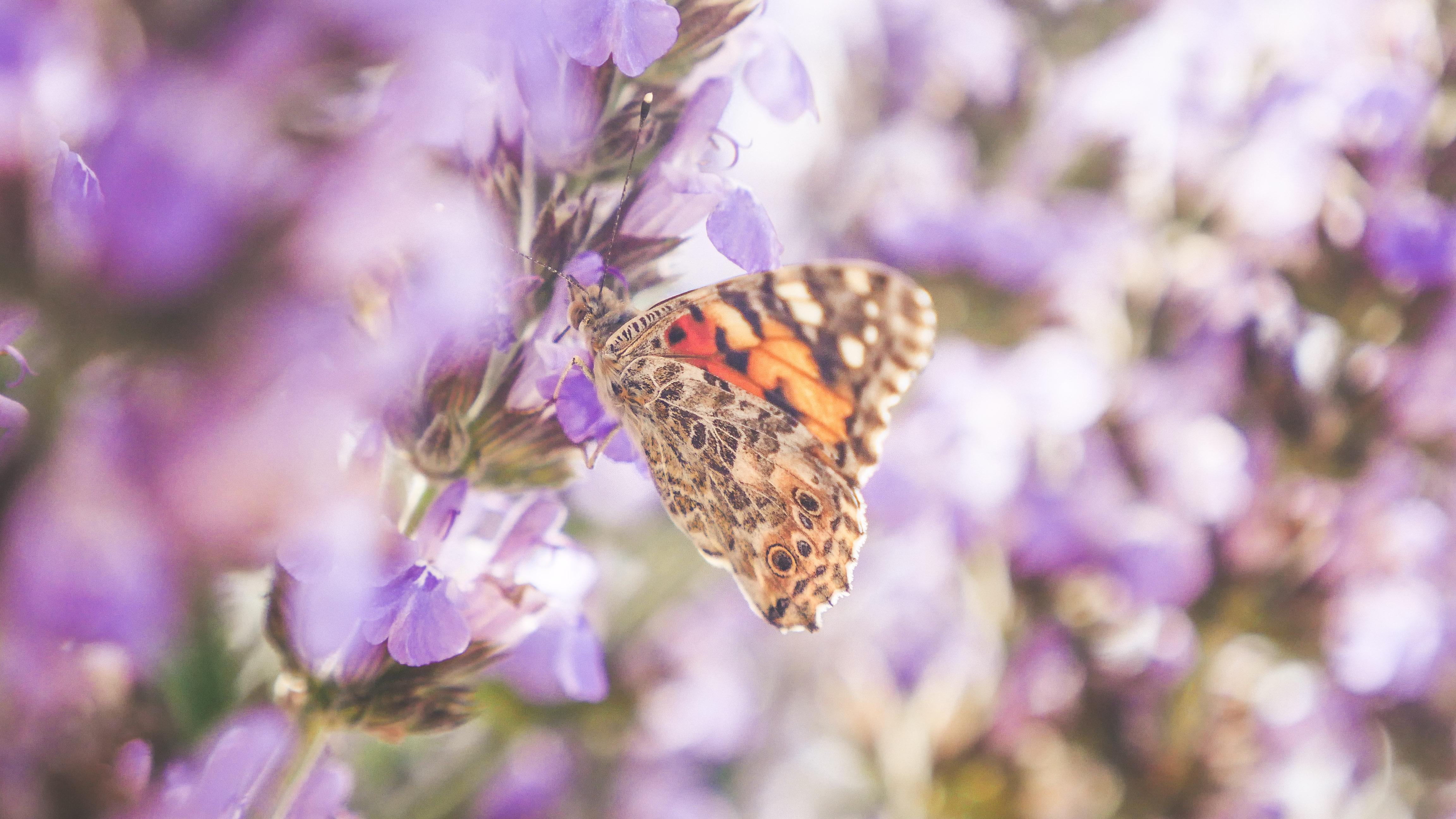butterflies edited (3 of 24)