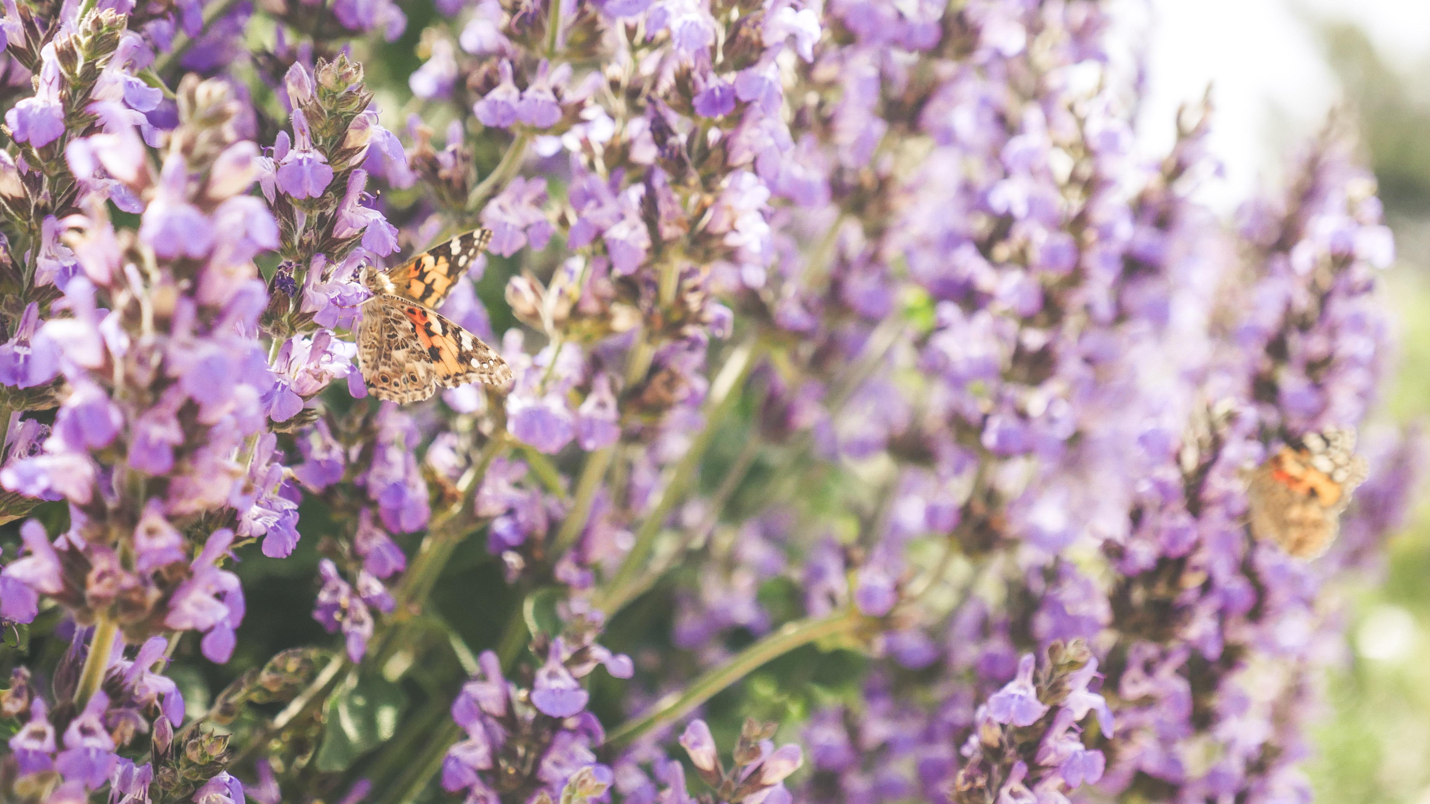 butterflies edited (1 of 24)