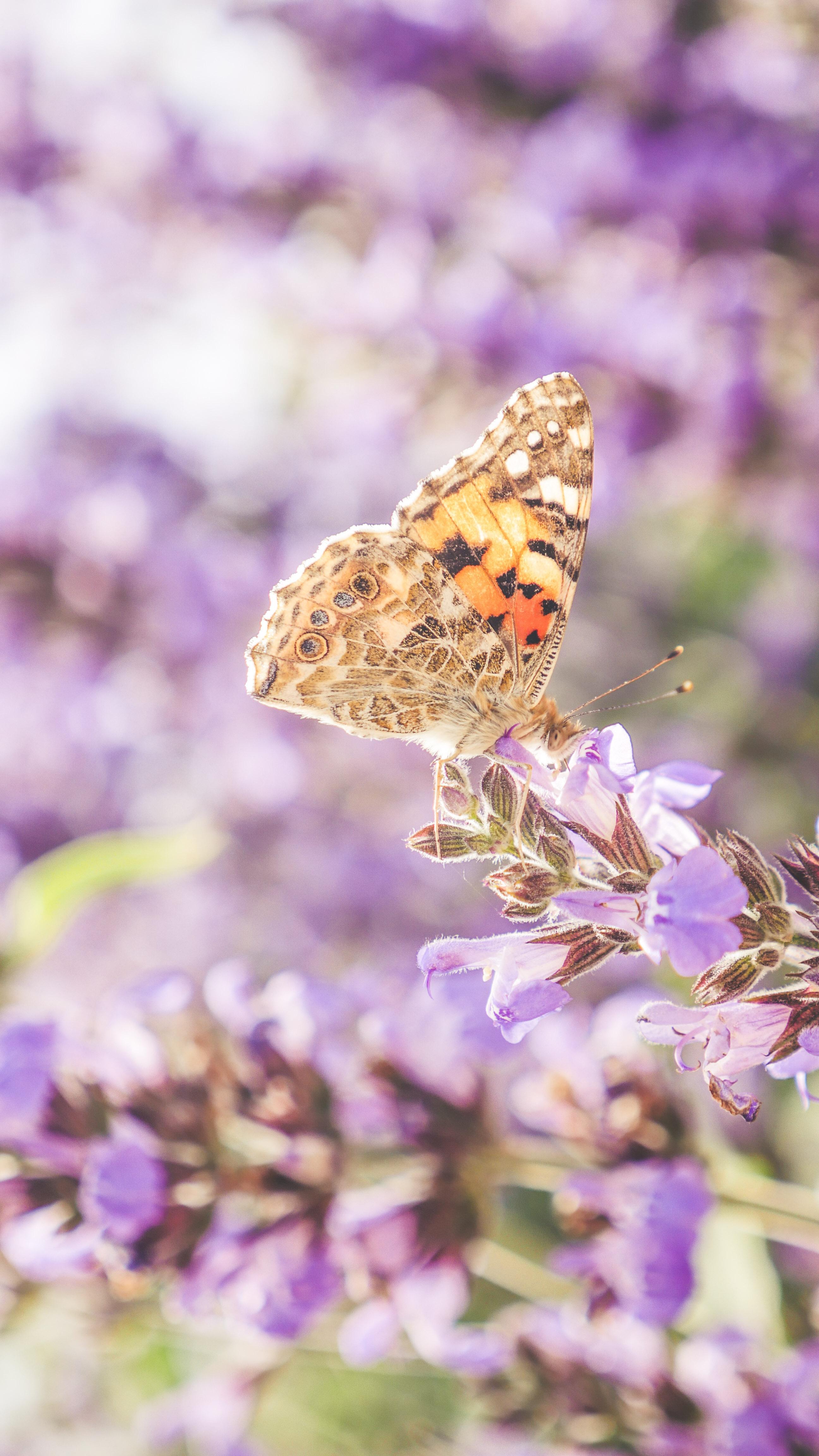 butterflies edited (7 of 24)