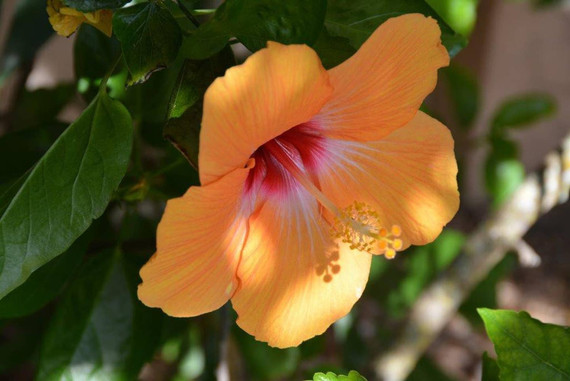 Anna Maria Island Flowers