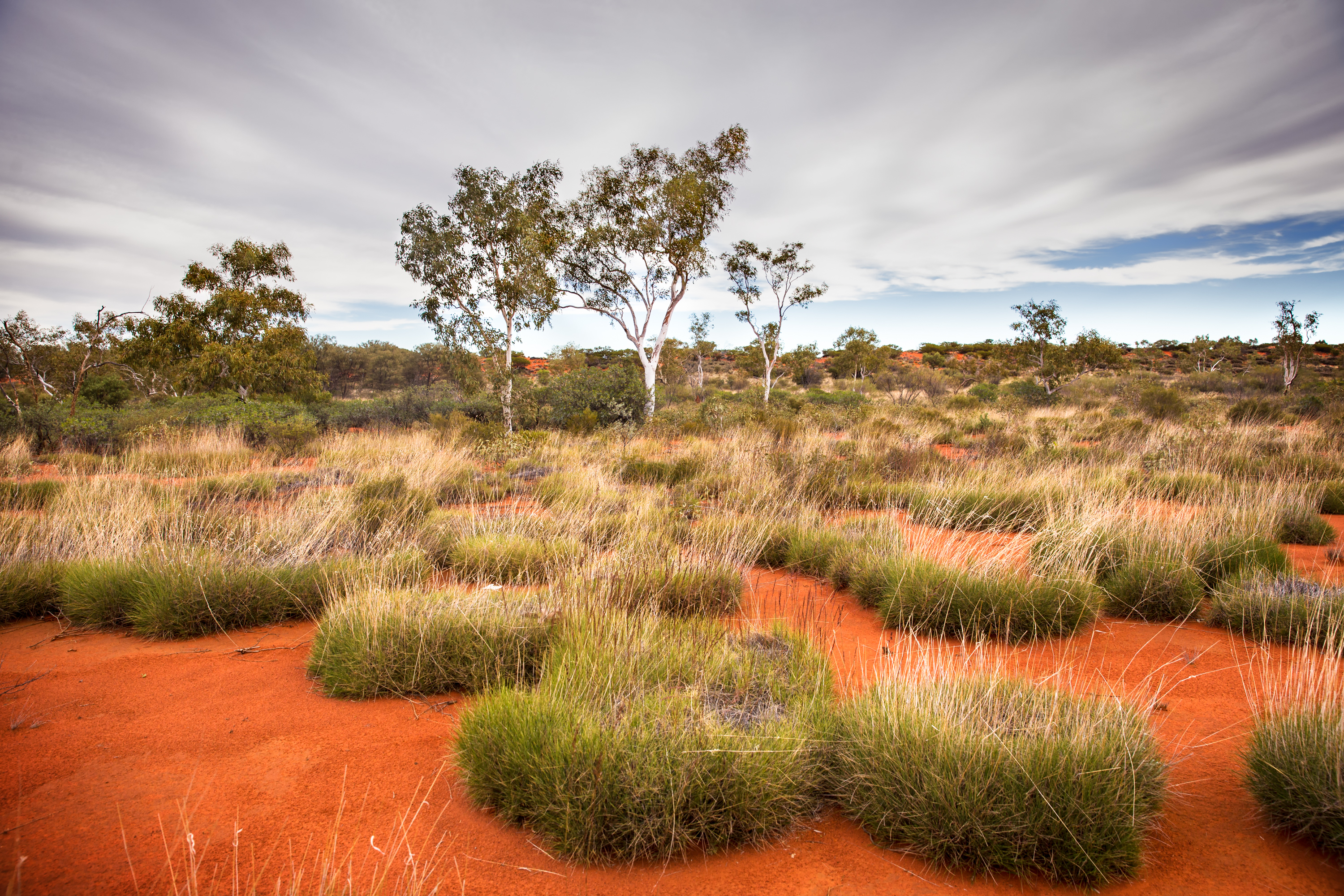 Spinifex for miles