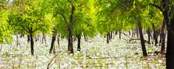 White Lily Billabong