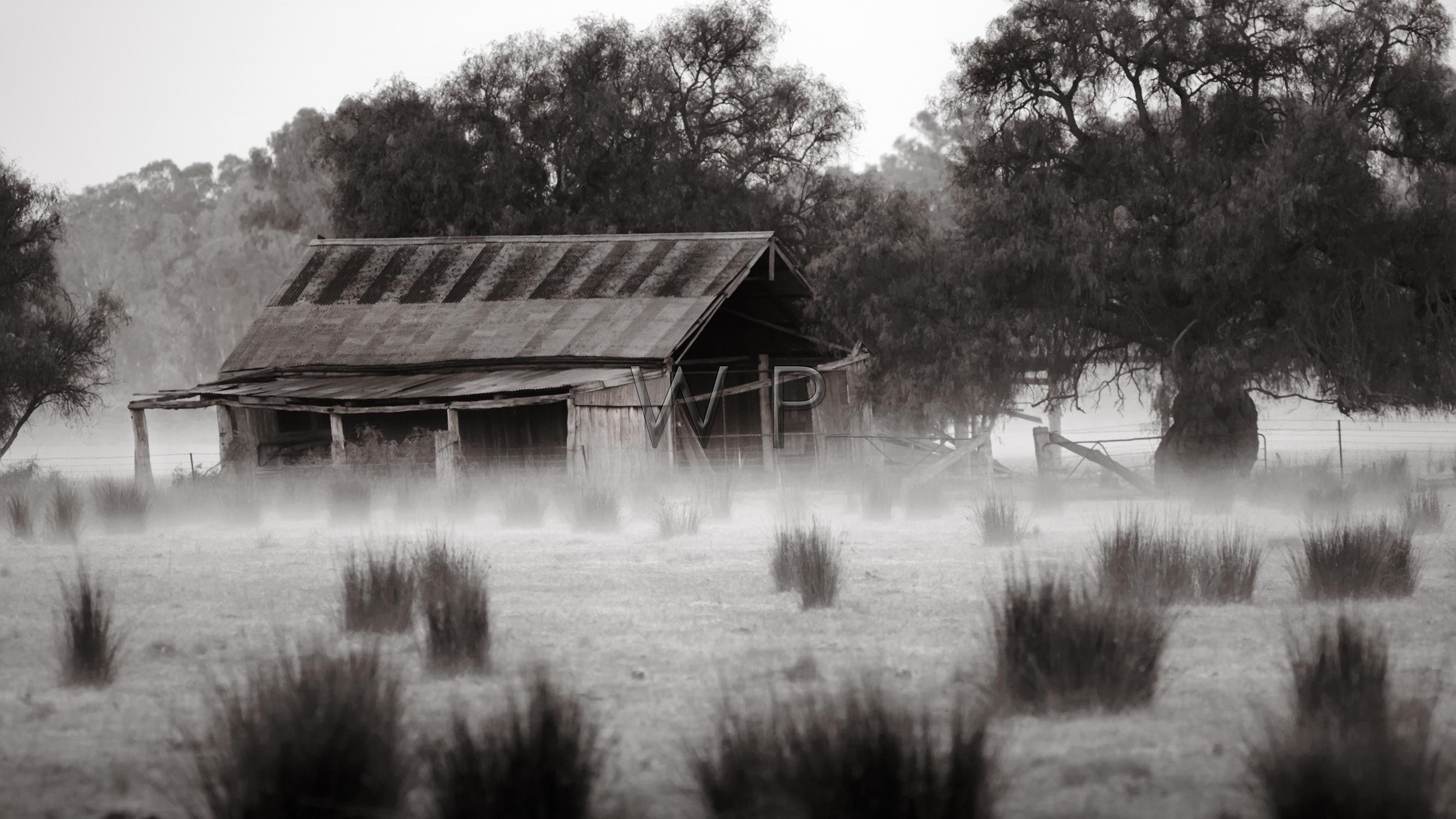 Misty Shed
