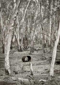 Barrel in Forest