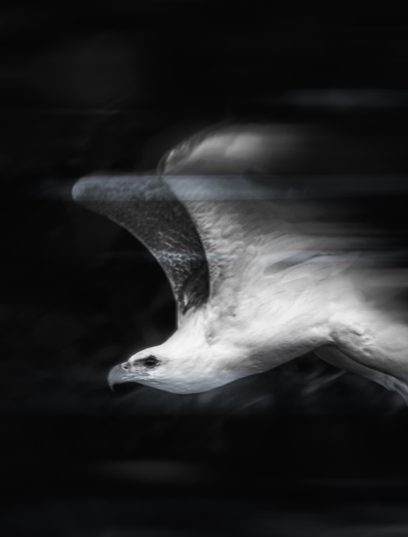 Sea Eagle Speed