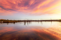 Pink Lily Lagoon
