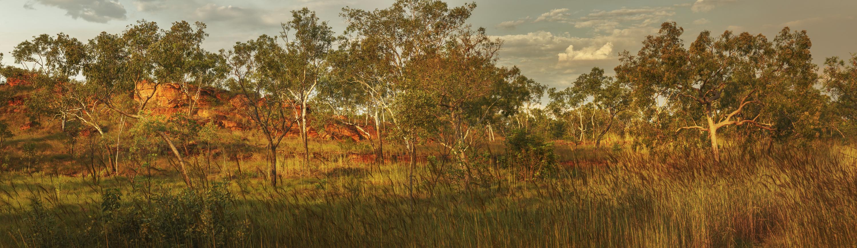 Kimberley bush