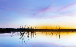 Lily Lagoon Reflection