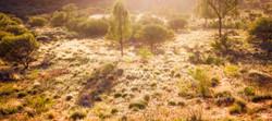 Desert Morning dew