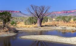 Boab, Waterhole, Range