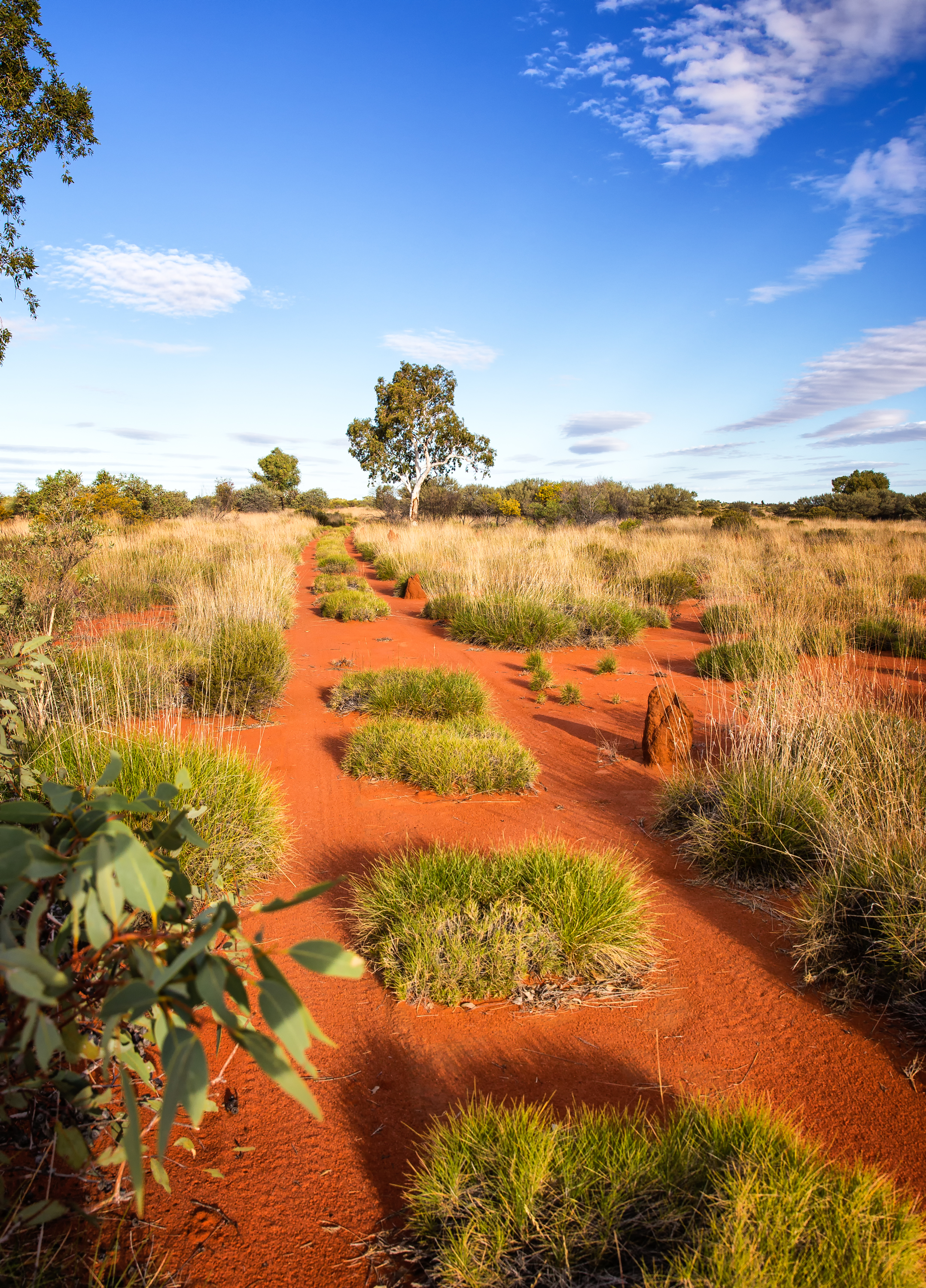Spinifex Track