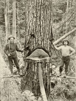 Old Oregon Loggers