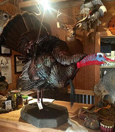 DH turkey.jpg