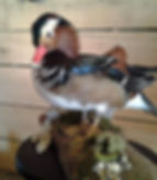 Donahue Taxidermy, taxidermist, mounts, services, ducks, standing, flying, geese, canadian geese, grouse, pheasants, quail