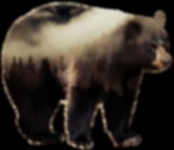 Donahue Taxidermy, taxidermist, bear, mounts, showroom, services, bear, Greeneville, Tennessee, TN