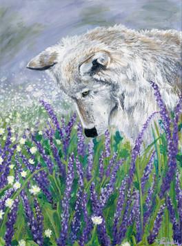 Lavender Wolf