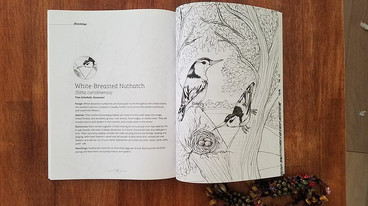 Hatchlings: A Coloring Book Anthology coloring pages