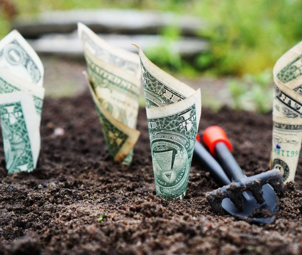 growing money