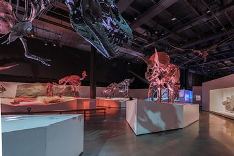 Houston museum.jpg