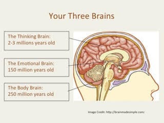 Getting To Know Your Three Brains: Part 1