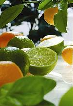 lime basil mandarin candles wax melts.jp