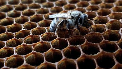 Beeswax & Honey Soap