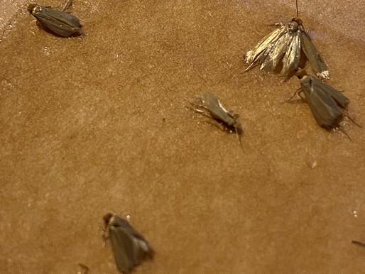 Moth Infestation! Part 2
