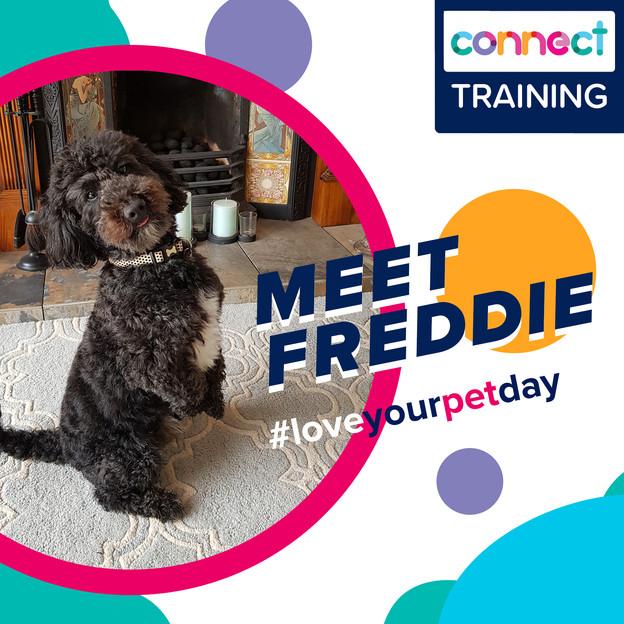 Meet Freddie