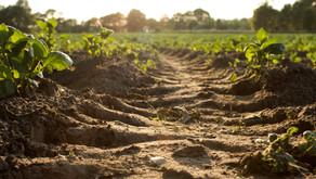 ¿Y USTED QUE VA A PEDIR DE PLATO FUERTE? Otra forma de cultivar y pensar nuestra agricultura