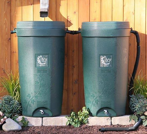 Ivy Rainbarrel