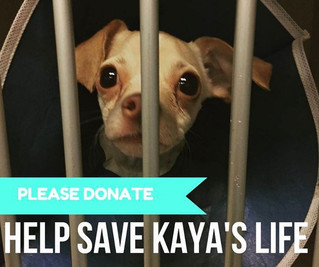 Kaya Needs Our Help
