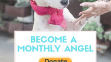Become an Angel (to a rescue dog)