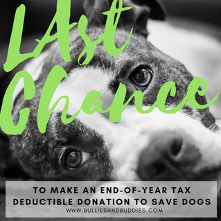 Last Chance to Make an End-of-Year Tax Deductible Donation to Save Dogs