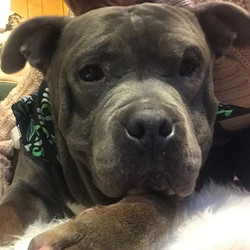 Don't you just want to kiss this face!__ #adoptme #bully #seniorsneedlovetoo