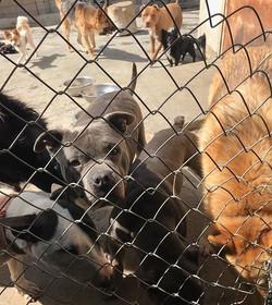 Bully having a blast _missionunderdoggroup #training #socialization #dogsofinstagram #adopt #trainer