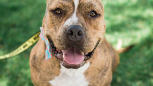 CAN YOU FOSTER SOFIA?