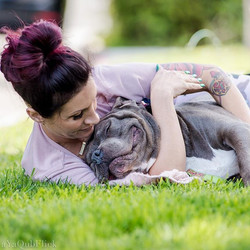 This pretty much sums up Bully #loveable #snuggly #loyal #unconditionallove #squishy #mush #adoptabl